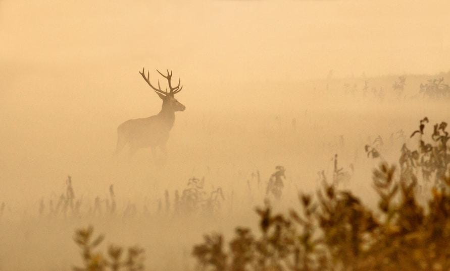 deer hunting in the fog
