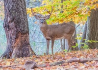 What Are the 5 Biggest Mistakes Made When Deer Hunting?