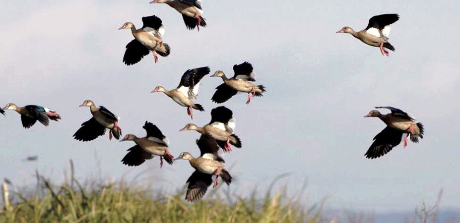 All The Duck Hunting Tips