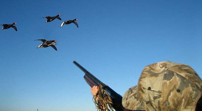 All The Duck Hunting Tips You'll Ever Need
