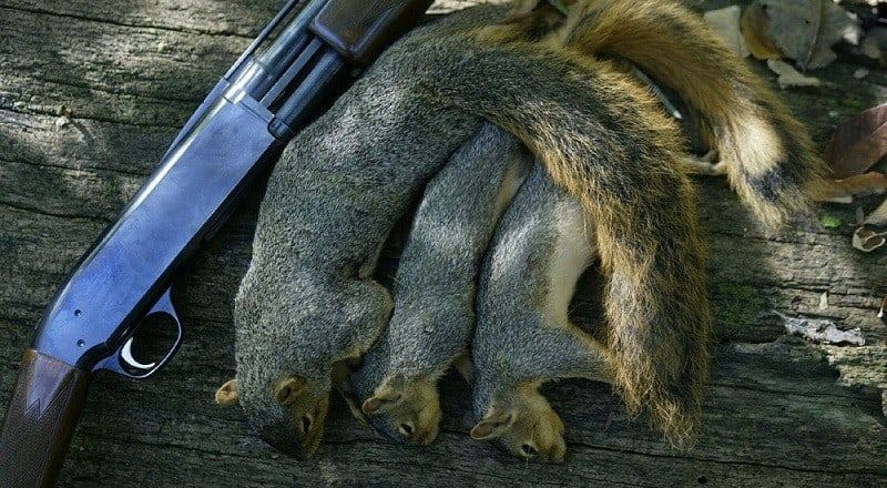 racoon hunting can be a lot more rewarding Complete list of all hunting regulations or laws, nor is it a legal document for  more  together, we can ensure the health of iowa's deer herd for future  generations  and parking lots unless specifically permitted  reward  payments.