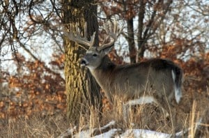 Whitetail Deer Hunting Location