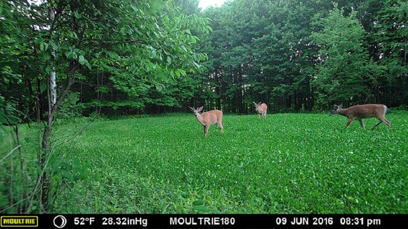 Moultrie Panoramic 180i Image Quality
