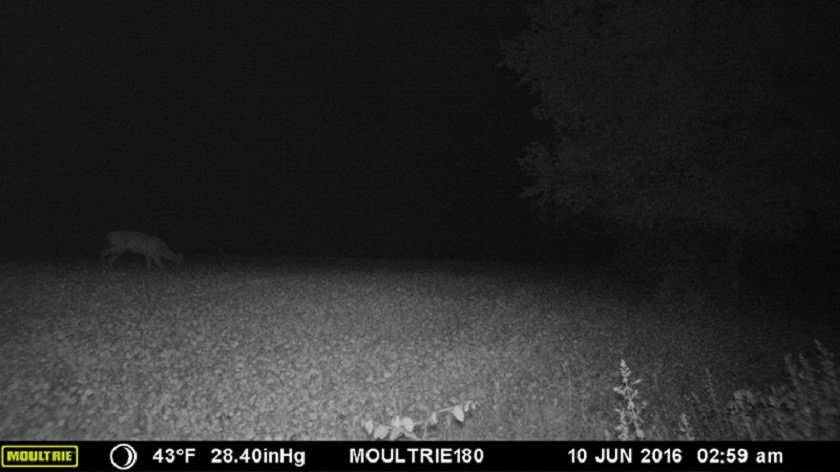 Moultrie Panoramic 180i night shot