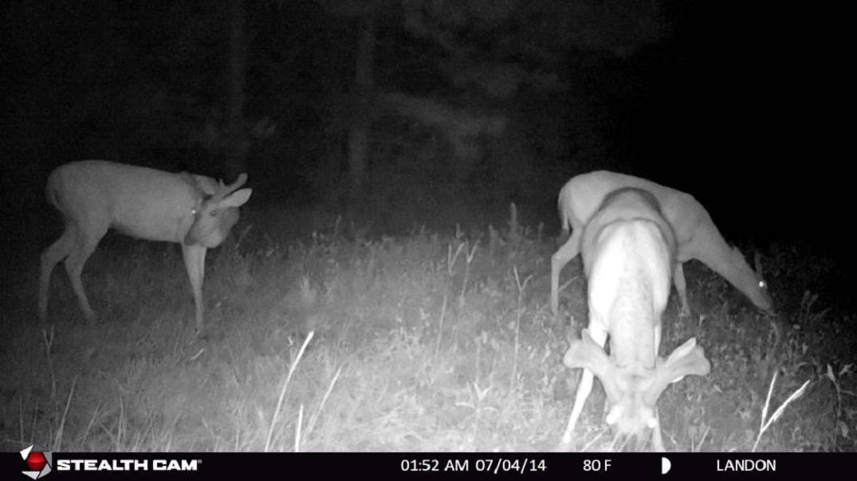 Stealth Cam G42 No-Glo night shot.