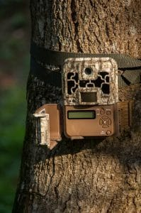 position your trail camera in a good spot
